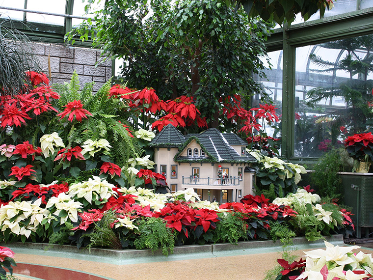 Little House in the Poinsettias